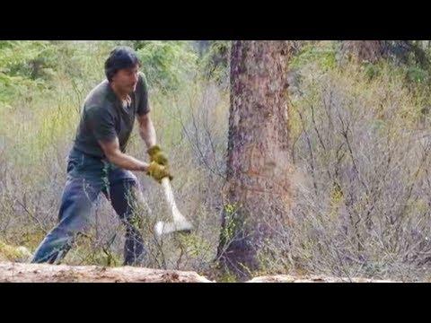 Camera Crew Narrowly Avoids Falling Tree | Life Below Zero | Earth Unplugged