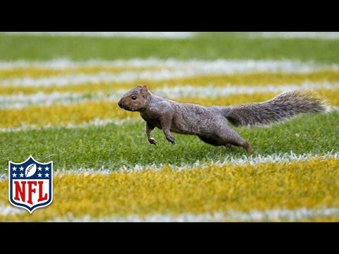 Squirrel Wreaks Havoc on Colts vs. Packers Game! | NFL
