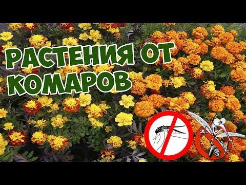 Растения от комаров 🌸 Как избавиться от комаров на даче 🌹 цветы  сад огород