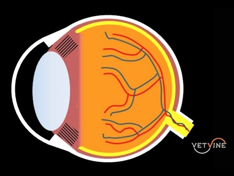 Assessing Vision Loss And Blindness In Dogs And Cats