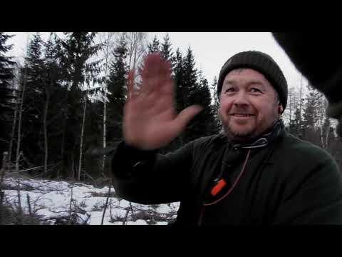 Revejakt med hund, Fox hunting with dogs, Rävjakt