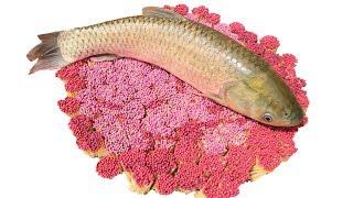 PHD | Nướng Cá Bằng 17000 Que Diêm | Grilled Fish With Matchstick