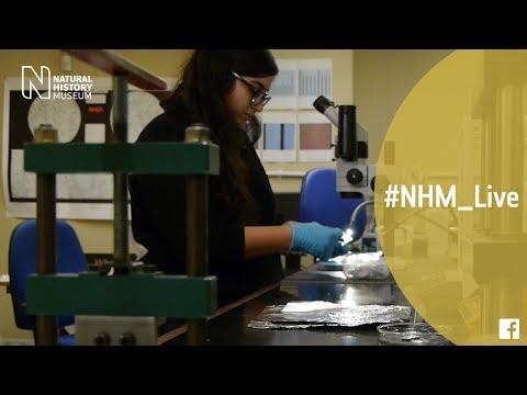 The science of shooting stars with Natasha Almeida | #NHM_Live