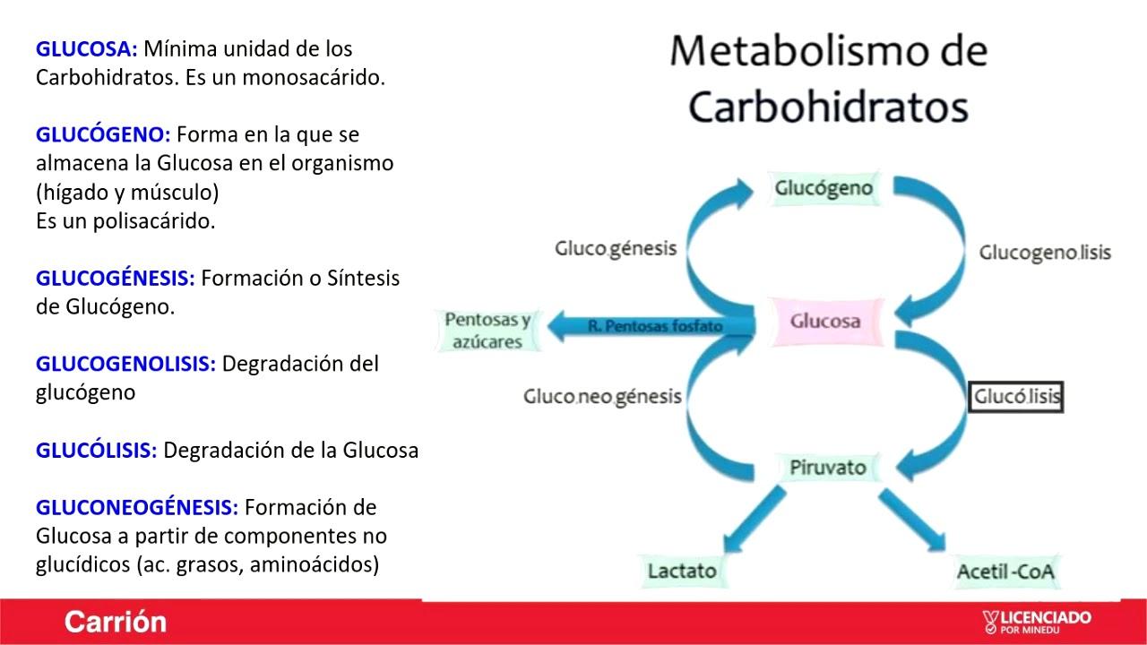 10 maneras de evitar Cómo aumentar el metabolismo Burnout