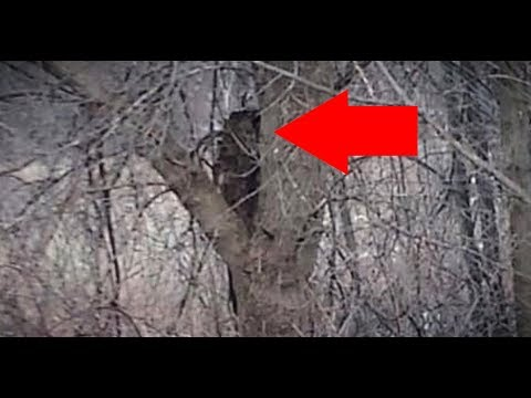 """13 Scariest NEVER Before Seen CREEPY Images of """"REAL LIFE BIGFOOT"""" Caught On Camera!!"""