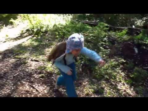 Lena corre en bosque de Araucaria araucana - Terrorismo Mapuche