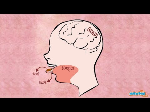 Sense of Taste - How the Body Works | Human Body Science For Kids | Kids Education by Mocomi Kids