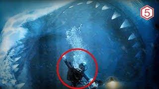 Megalodon belum punah ? 5 Penampakan Megalodon yang tertangkap kamera