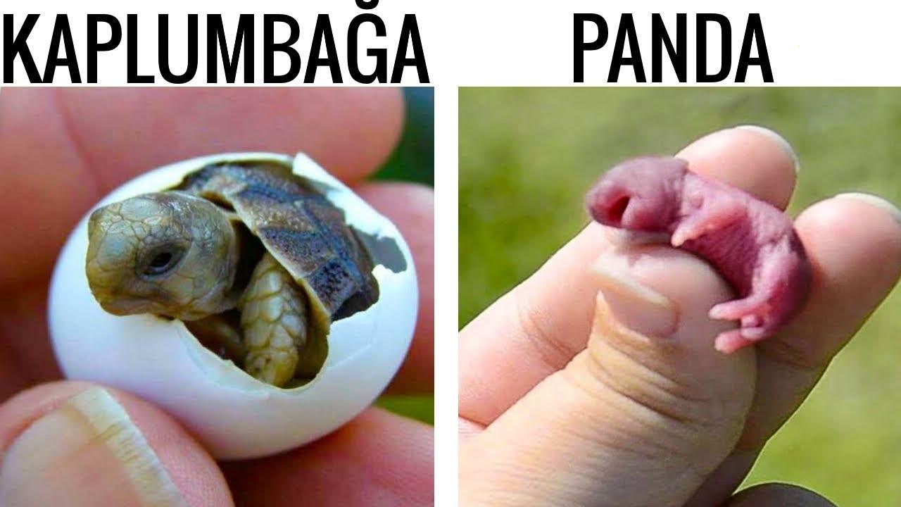 En Tatlı Yeni Doğan Hayvanlar
