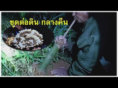 ขุดต่อดิน กลางคืน (บย่า แปลว่า ผึ้ง)ep29