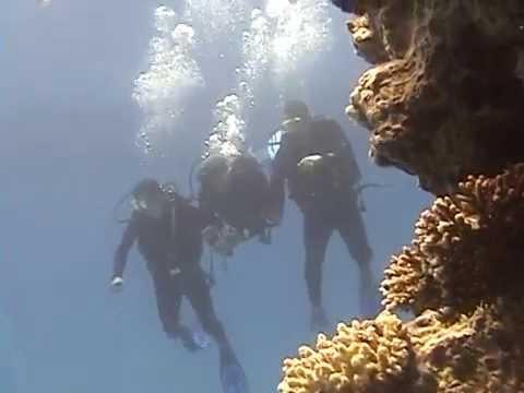 Zag Pharmacy students scuba diving