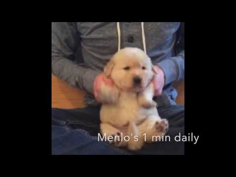 Cutest animals vine