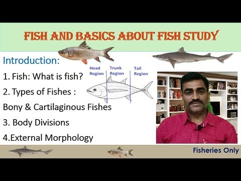 Fish And Basics Of The Fish Study | External Morphology Of Bony Fishes
