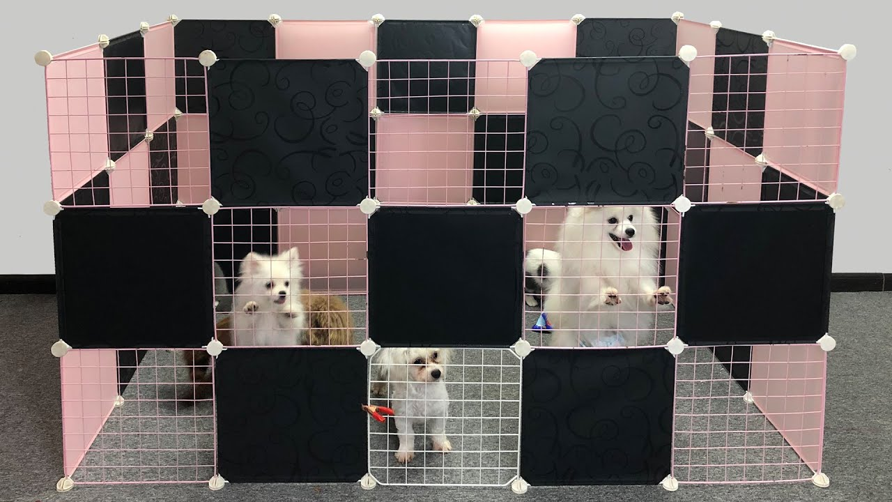 AMAZING DIY Dog House For Pomeranian Dog & Munchkin Cat With Cubic | Min Puppy | MR PET