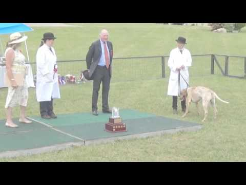 Canadian Foxhound Show 2017