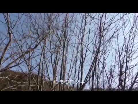 金沢自然公園H270104中高木の樹木観察編