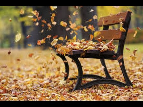 Fall Leaves Dancing Wallpaper Horror Sound Effect Leaves In The Wind Youtube