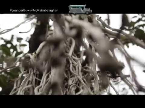iJuander: Are big old trees homes to supernatural beings?