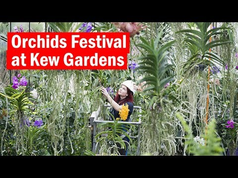 Orchids festival at Kew | First Look | Time Out London