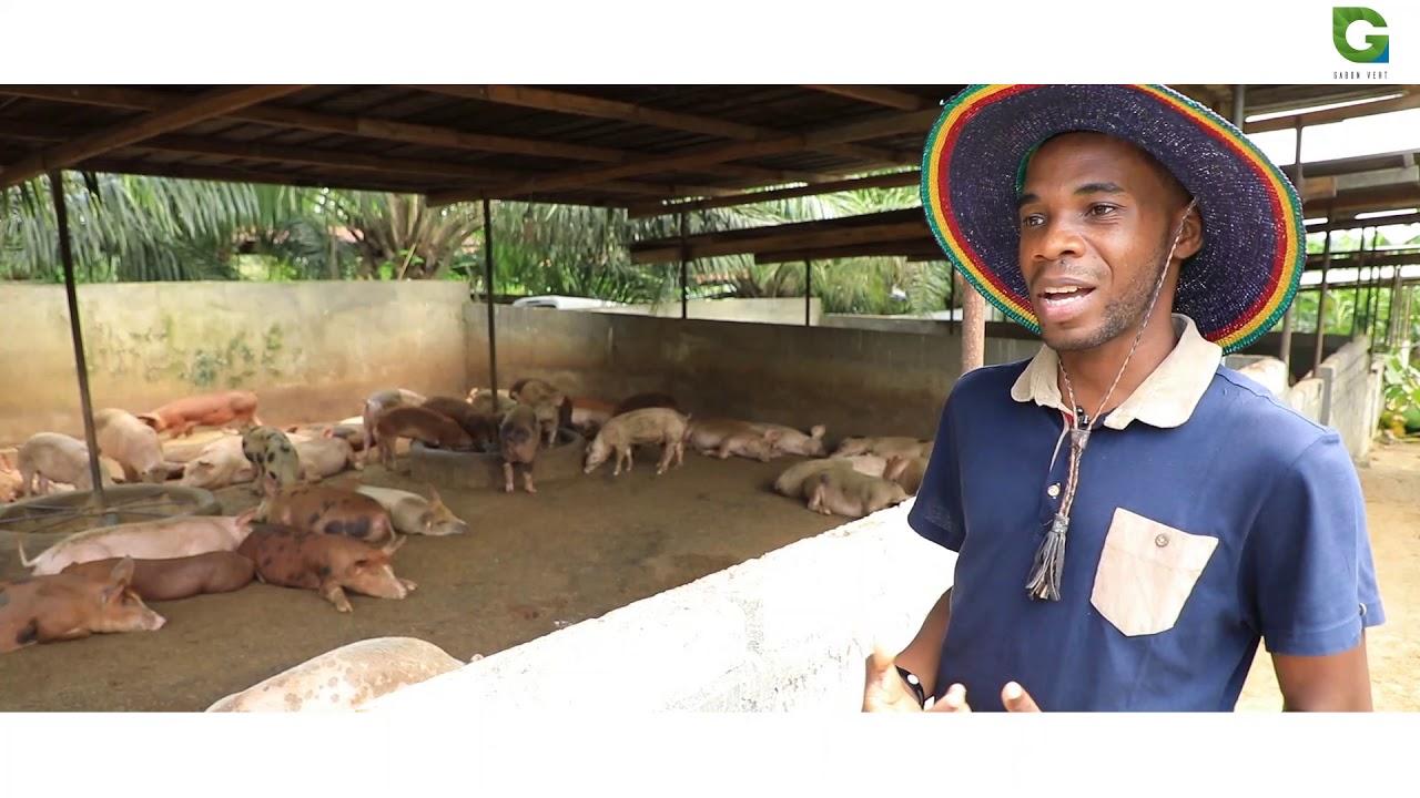 Download Elevage porcin et avicole au Gabon