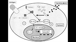 Tacrolimus (FK-506) - Mechanism of Action, Clinical Use & Side Effects