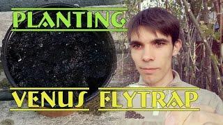 Plantare Venus Flytrap din seminte / Planting Venus Flytrap from seed