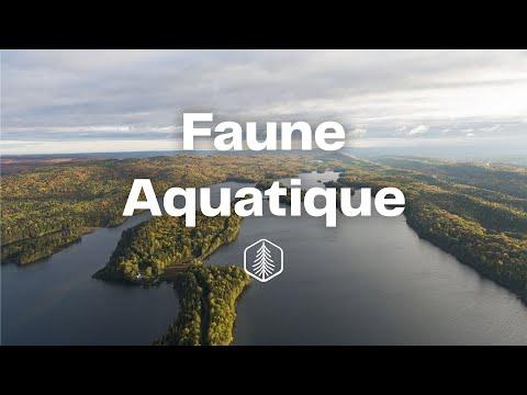 Réserve faunique Duchénier - Richesse faunique