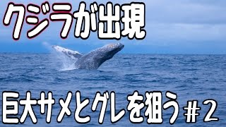 巨大クジラ出現!サメと尾長グレを狙う 2話 カツオクジラ 検索動画 15