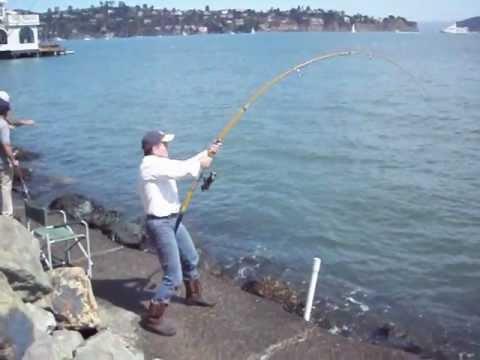 Giant Stingray Fishing In Sausalito California