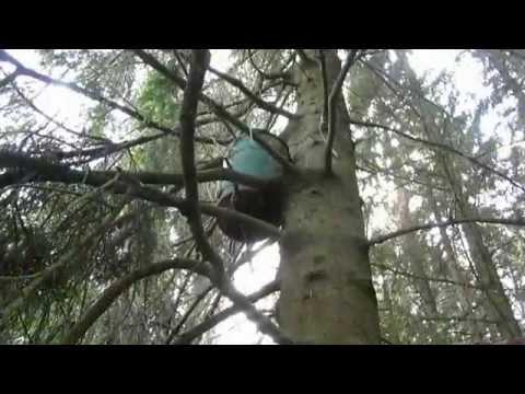 ловля роев ставим ловушки 2015 видео