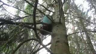 Уроки юного охотника на бродячие рои 2 часть  «Ловушки, установка на деревьях»