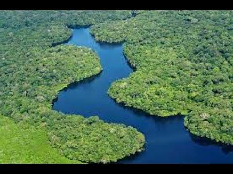 Download The story book: MSITU WA AMAZON WENYE MAAJABU MENGI DUNIANI
