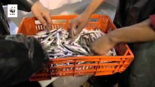 Μια νέα ελπίδα για την αλιεία από την Καβάλα - Πιστοποίηση MSC