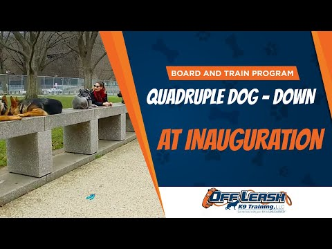 Quadruple Dog Down At Inauguration | Best Board and Train Program in Virginia
