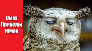 Канал Видео Приколов - Смешные видео про животных до слез | Лучшие приколы №7
