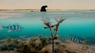 видео Как поймать окуня зимой на подледной рыбалке