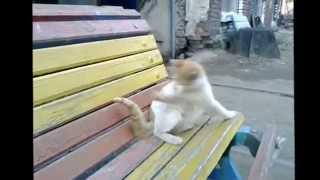 Премьера! Кот лижет достоинство