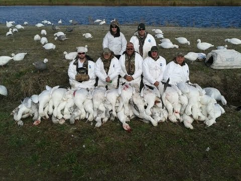 Currituck County Snow Geese- Fourth Generation Outfitters