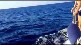 Delfini - Croazia 2016