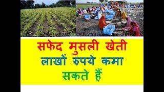 सफेद मुसली खेती लाखों रुपये कमा सकते हैं