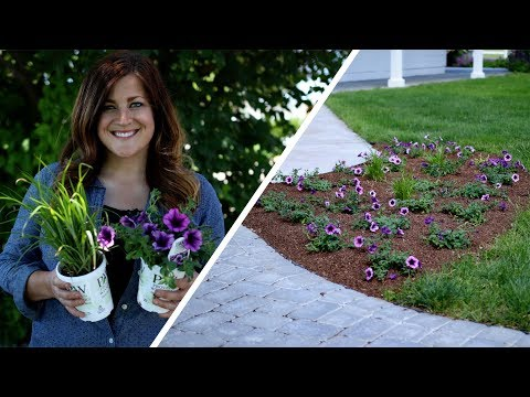 Tips for Planting Annuals in the Landscape // Garden Answer