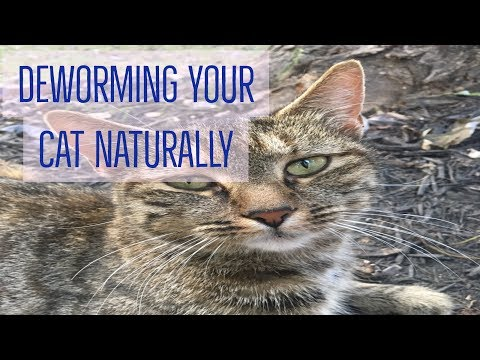 Deworming Your Cat Naturally - YouTube
