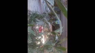 Video P & t ke anmol sitare download MP3, 3GP, MP4, WEBM, AVI, FLV November 2017