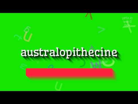 "How to say ""australopithecine""! (High Quality Voices)"