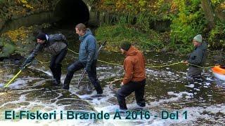 *ELFISKERI / ELECTRO FISHING* For Brown Sea Trout // Havørred i Brænde Å på Fyn 2016 - Part1 [HQ]
