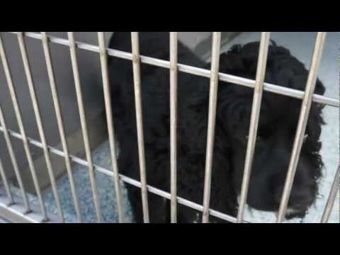 Devon at the Long Beach Animal Shelter  (5-20-12)