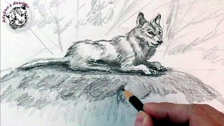 How to draw a wolf with pencil, step by step: How to draw animals