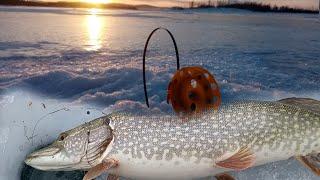 Раставили жерлицы в метель и началось Зимняя рыбалка на жерлицы 2021