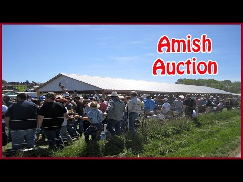 Amish Farm Auction - Scottsville, KY