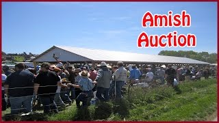Amish Farm Auction - Scottsville, K...